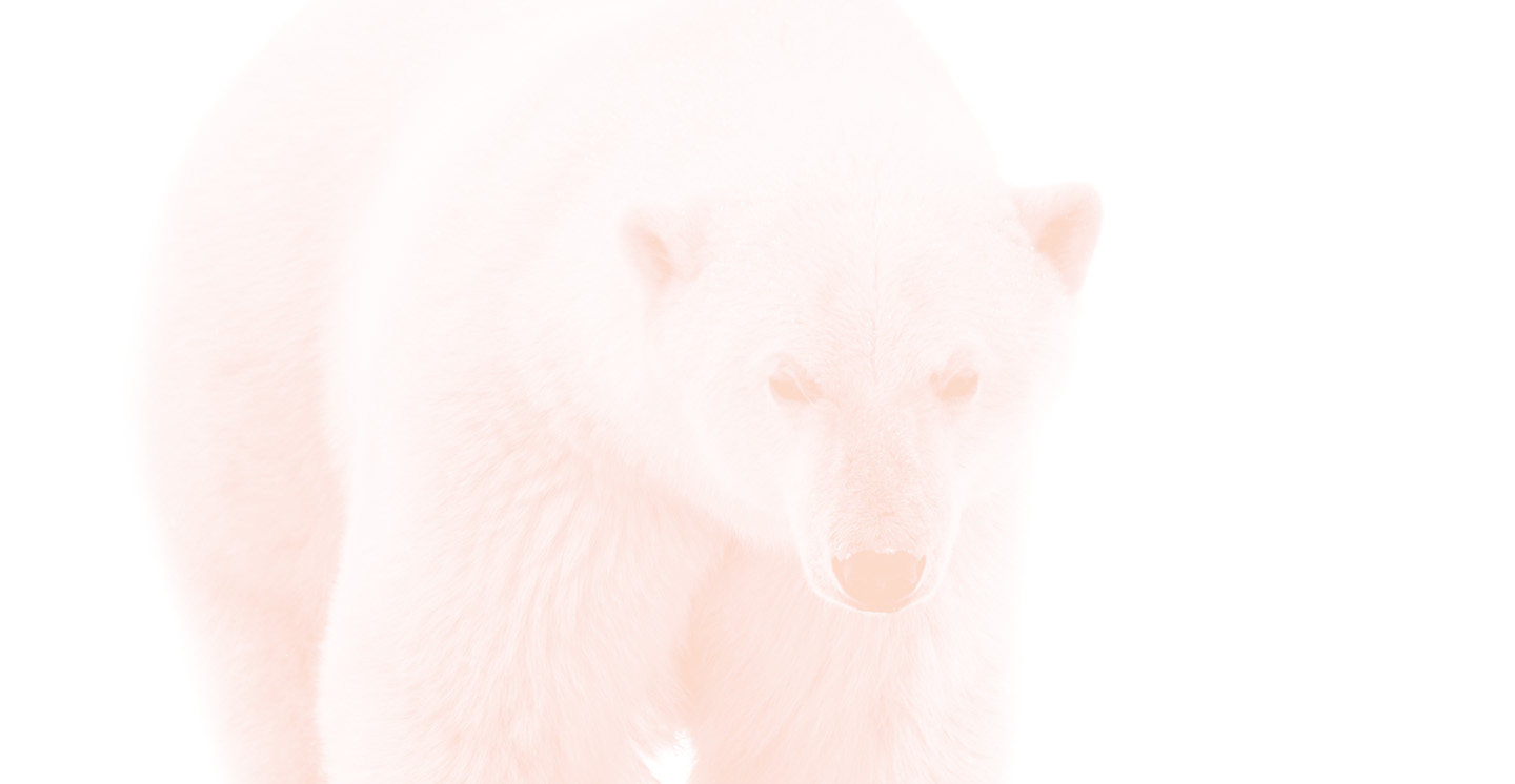 Polar Bear background